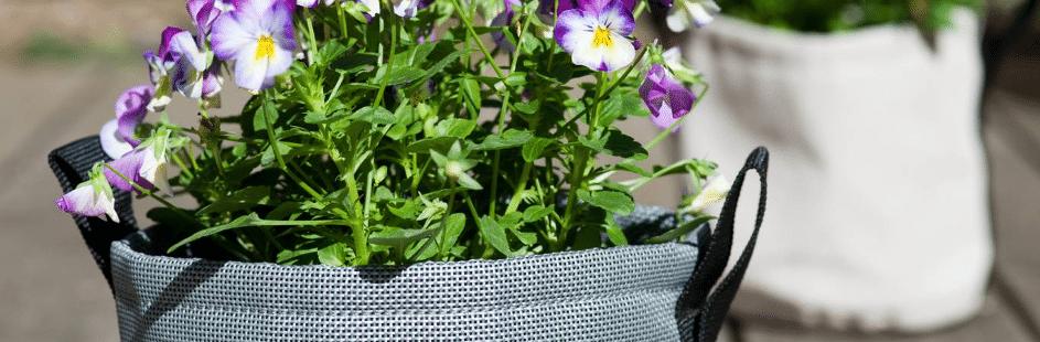 plantes autour de la piscine